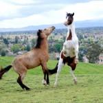Elite Equine Vet Services Rabies