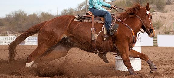 elite-equine-chiropractic-equine