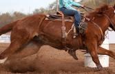Equine Chiropractic Care