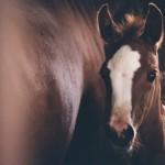 Elite Equine Vet Kansas Foal 4