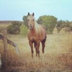 elite-equine-ks-animal-chiropractic-25