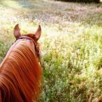 Elite Equine Kansas Vet