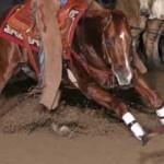 AQHA Elite Equine1