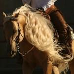 Elite Equine AQHA