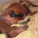 equine-colic1