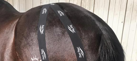 kinesiology-taping-for-animals-elite-equine